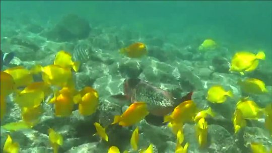 NatureVision TV Presents a Preview of our Underwater Paradise program